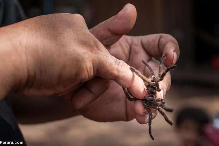 (تصاویر) خوردن رتیل و عنکبوت در کامبوج