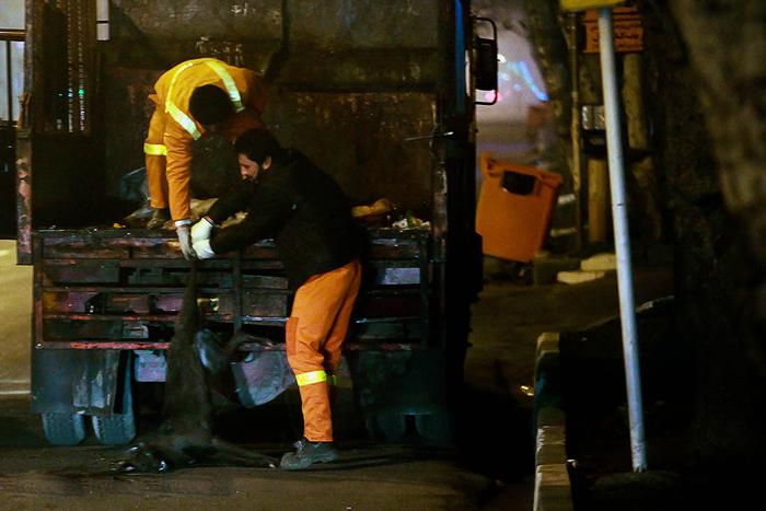 (تصاویر) سگکشی شبانه شهرداری رشت