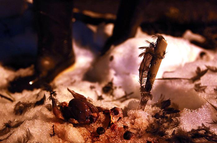 (تصاویر) تفریح شبانه با شکار گنجشکهای خواب