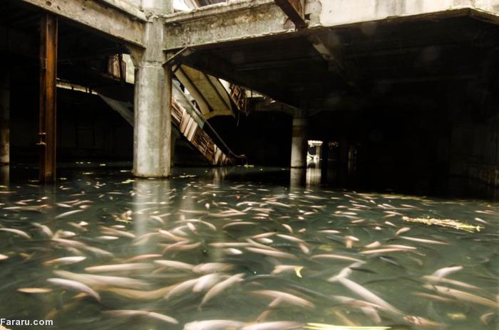 (تصاویر) ماهیگیری در ساختمان متروکه!