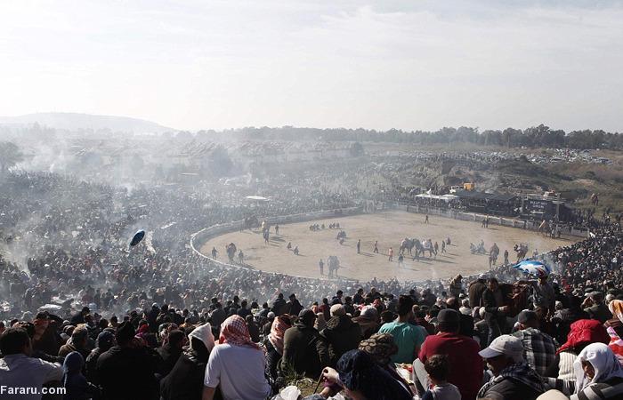 (تصاویر) کشتی شترها