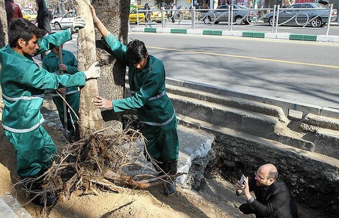 (تصاویر) درختکاری قالیباف در بین مردم