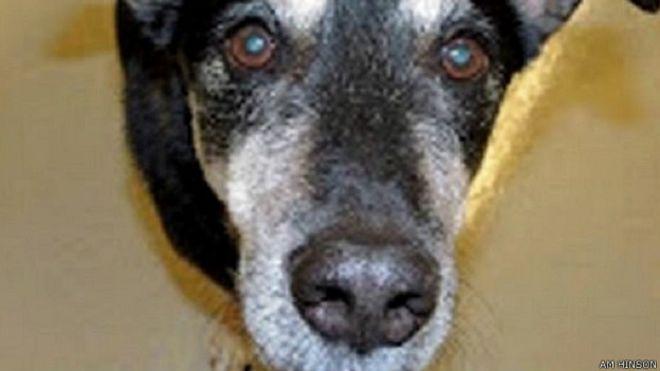 سگی که سرطان تیروئید را تشخیص میدهد