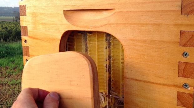 (تصاویر) کندویی که اتوماتیک عسل میدهد!