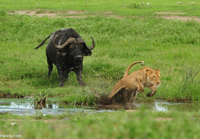 (تصاویر) عجیب و دیدنی از دنیای حیوانات