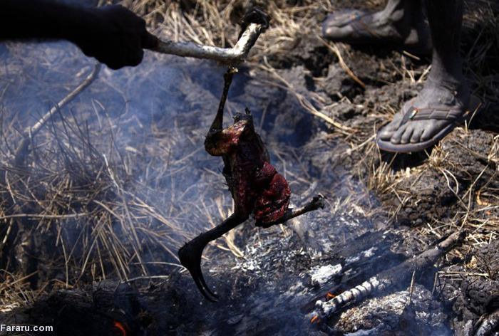 گوشت تمساح قیمت تمساح شکار تمساح