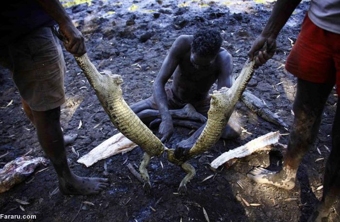 (تصاویر) شکارچی تمساح