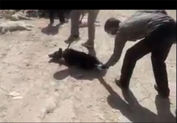 سگکشی دردناک با اسید در شیراز!