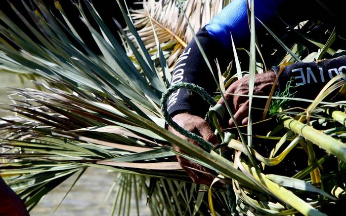 (تصاویر) کاشت درخت نخل در عمق 40متری