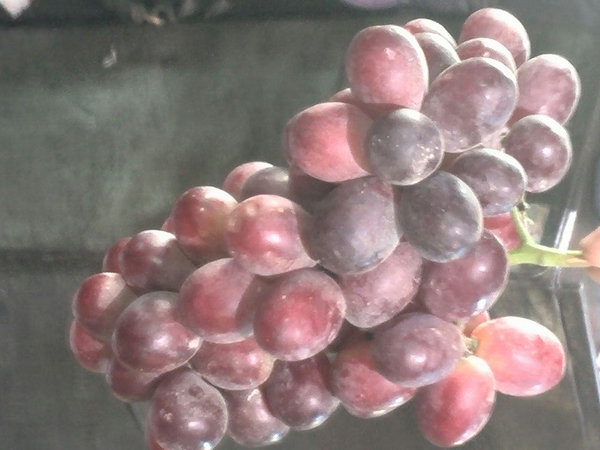 توزیع گسترده و شبانه میوههای خارجی در تهران/ مسئولان متعجب شدند