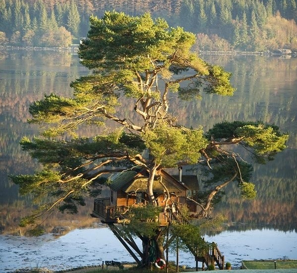 ماه عسل عکس رمانتیک خانه رمانتیک خانه درختی توریستی اسکاتلند