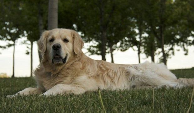 سگی که خیلیها را در اینترنت مجذوب کرد+(تصویر)