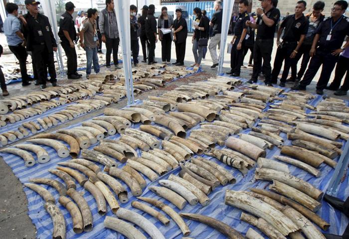 (تصاویر) محموله 4تنی عاج فیل در تایلند