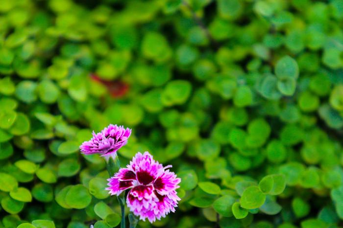 (تصاویر) نمایشگاه گل و گیاه در تهران