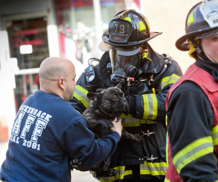 (تصاویر) عملیات نجات سگ از شعلههای آتش