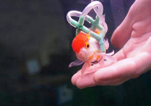 (تصاویر) ویلچری برای ماهی!