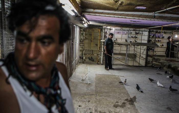 (تصاویر) مسابقه کفتربازهای تهران