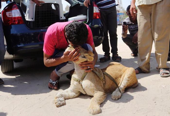(تصاویر) نوجوان غزهای تولهشیرها را تحویلداد