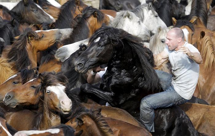 (تصاویر) کشتی گرفتن با اسبهای سرکش