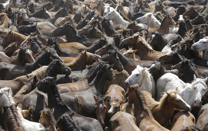 کشتی گرفتن با اسبهای سرکش در اسپانیا