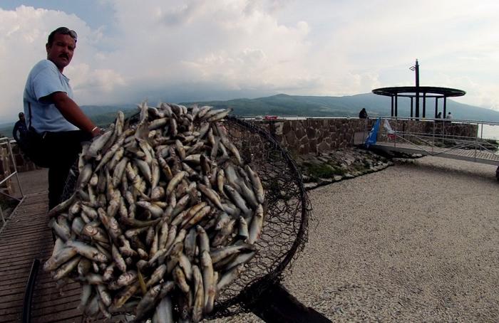 (تصاویر) مرگ ملیونها ماهی در مکزیک