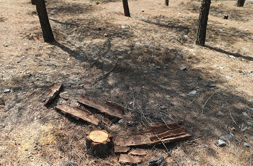 (تصاویر) درختان ورزشگاه آزادی خشک شد