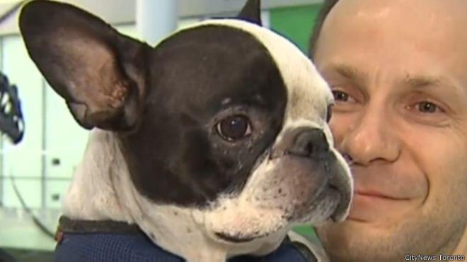 خلبان هواپیما را برای نجات سگ از مسیر اصلی منحرف کرد