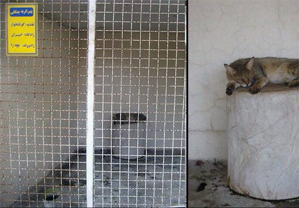 (تصاویر) وضیت وخیم باغوحش تبریز