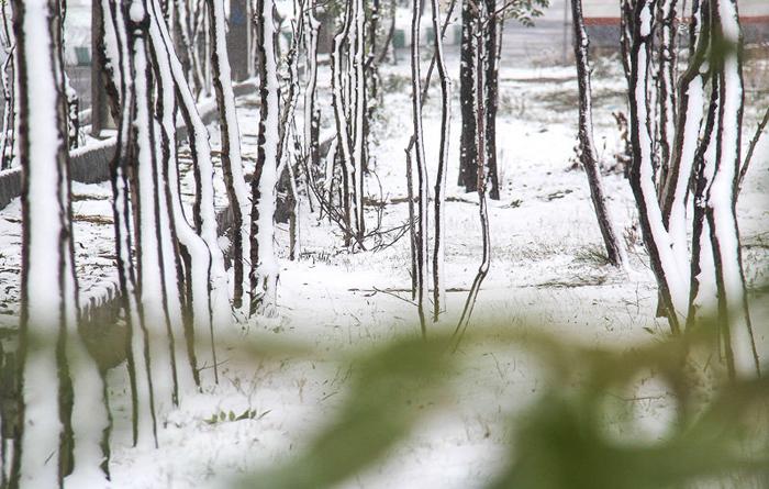 (تصاویر) اردبیل سفیدپوش شد