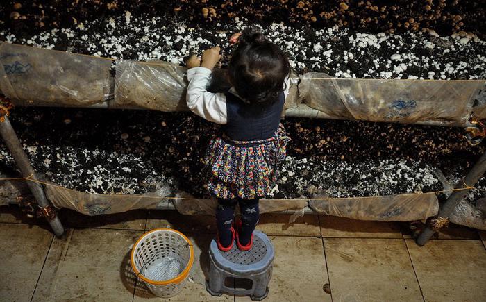 (تصاویر) پرورش قارچ در زیرزمین خانه پدری