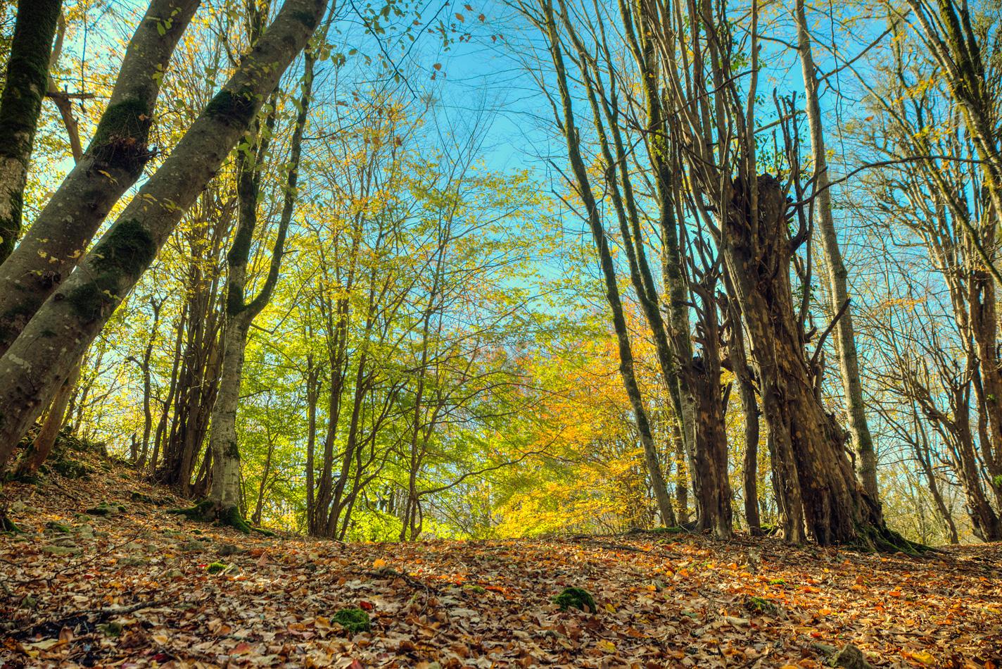 (تصاویر) جادوی طبیعت در
