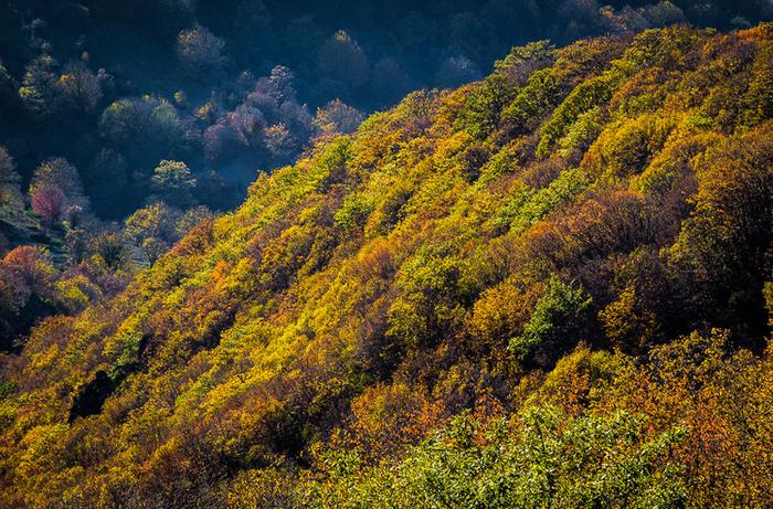 (تصاویر) پاییز طلایی جنگل ابر