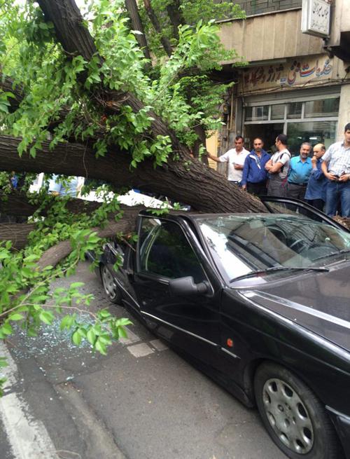 (تصویر) سقوط درخت روی 3 خودرو