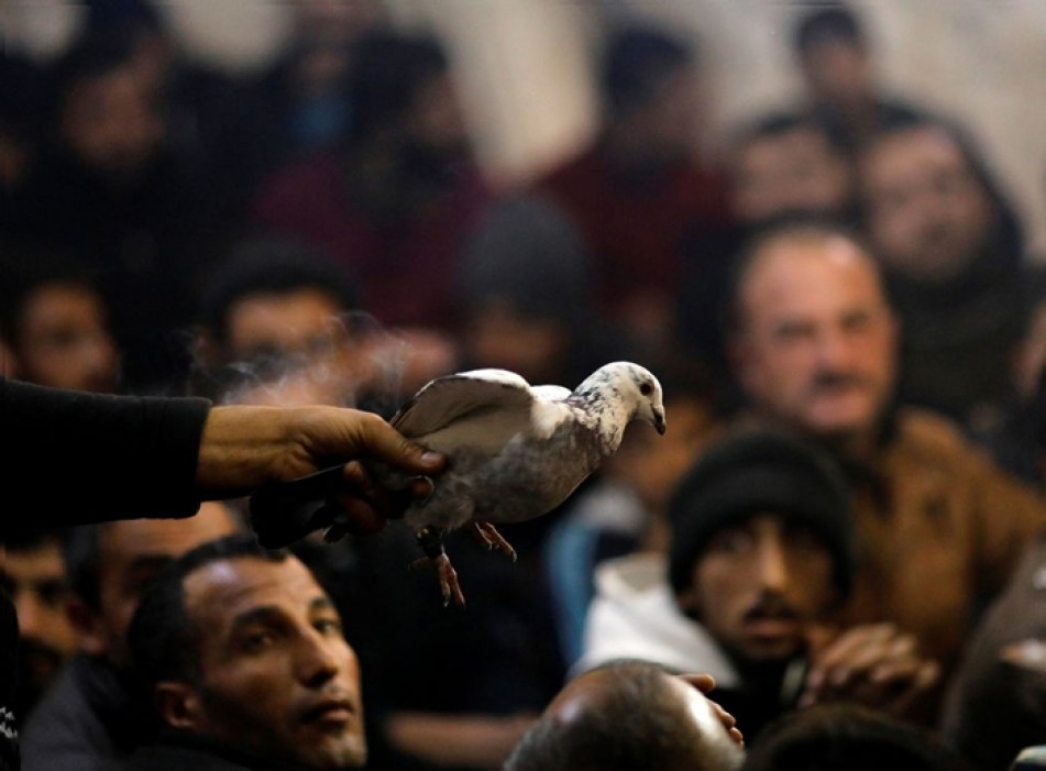 (تصاویر) تجارت کبوترهای لوکس در ترکیه