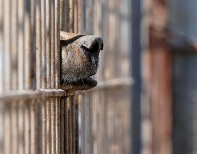 (تصاویر) دو بازمانده قحطیزده باغوحش موصل