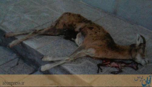 اقدام بی رحمانه یک شکارچی در کرمان