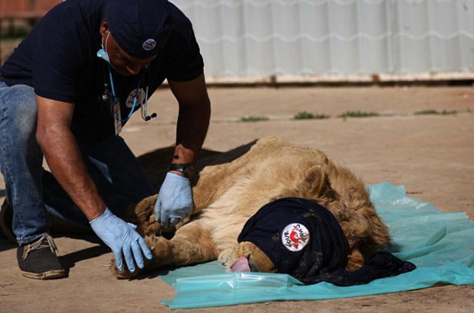 (تصاویر) کمک به حیوانات باغ وحش موصل