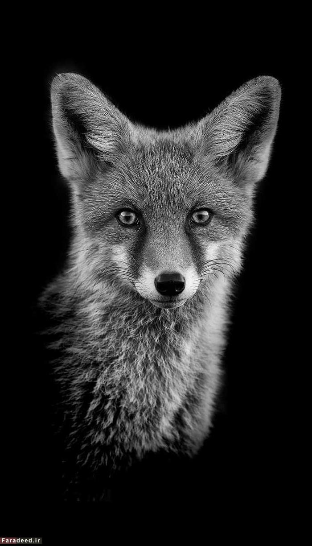 (تصاویر) پرتره هایی از دنیای حیوانات