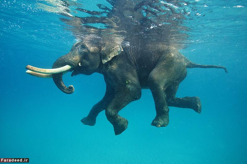 (تصاویر) نماهایی دیدنی از حیوانات در زیر آب