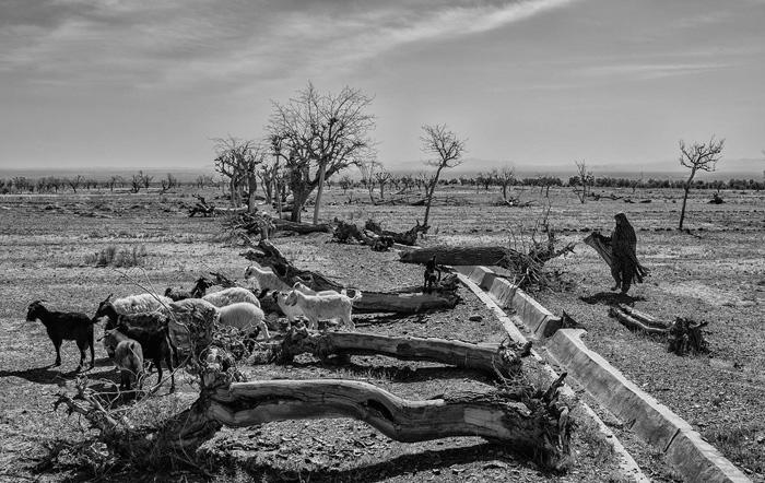 (تصاویر) خشکسالی در شرق کشور