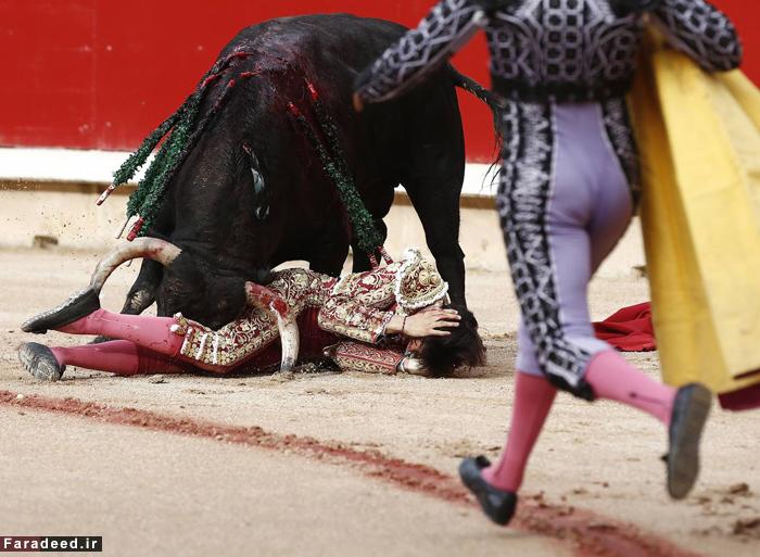 (تصاویر) نبرد خونین ماتادور 19ساله و گاوخشمگین