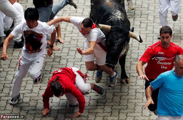 (تصاویر) روزهای خونین فستیوال گاوبازی