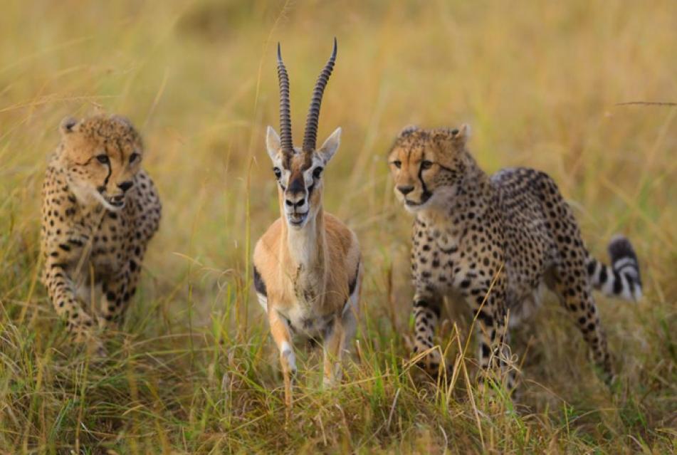 (تصاویر) زیباترینهای حیاتوحش