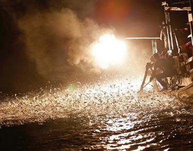 (تصاویر) صید ماهی با شعلههای آتش!