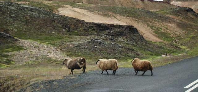 7 نکته شگفتانگیز درباره ایسلند