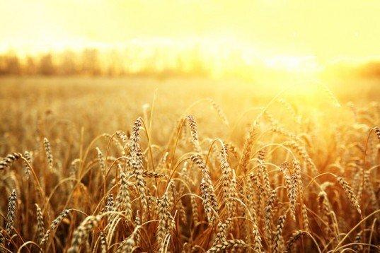 7 گیاهی که ناجی دنیا هستند را بشناسید