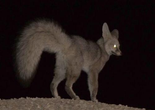 (تصویر) شناسایی شاهروباه در جنوب ایران