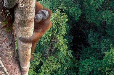 (تصاویر) برترینهای حیات وحش 2016