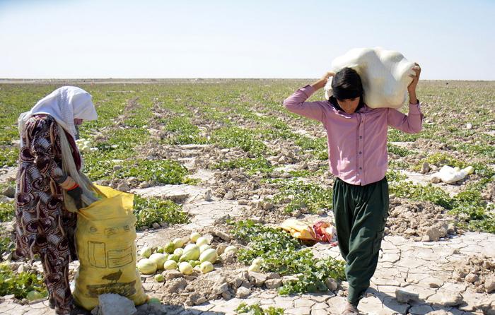 (تصاویر) استفاده بهینه از خشکیِ هامون