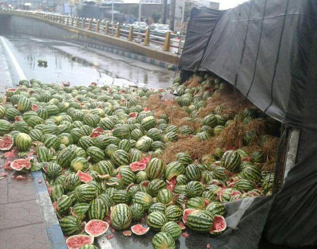 (عکس) هندوانههایی که به یلدا نرسید!